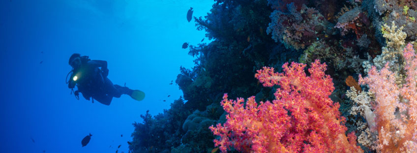 Diver looking at Red Sea reef